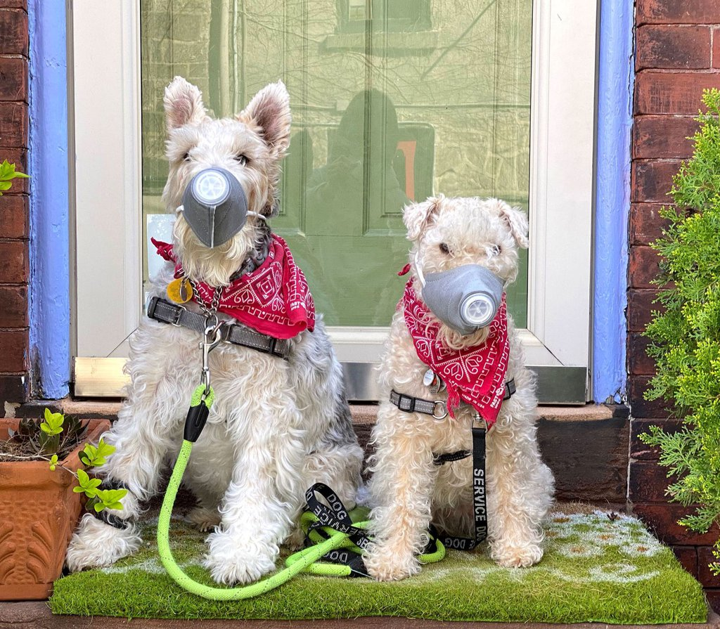 Izzie, left, and Tippi wear ventilated dog masks in Philadelphia on April 6.Sabina Pierce.jpg